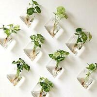 Neu Natural Wandbehang Pflanze Terrarium Glas Pflanzer Diamant Körbe Töpfe A8J1