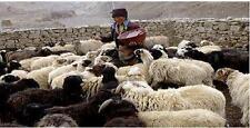 Animal Husbandry Livestock Rearing CD 30 Books Homesteading Meat Farm Animals