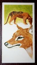 THYLACINE   Tasmanian Wolf     Superb Colour Card  VGC