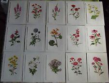 15 Affiches Botanique herbier Jardin 1970 Croix de Jérusalem,Anémone du Japon