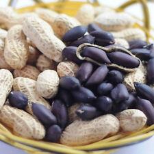 Black Peanut Seeds Peanut Plant Seeds Nut Seeds Organic Heirloom Vegetable Black