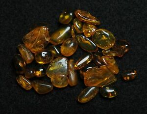 Fossil insects trapped in Baltic Amber, Lot of 32 pieces