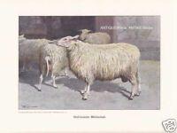 Schafe Tierfigur Tiere Bully Bullyland Farm Play Set === Schäfer