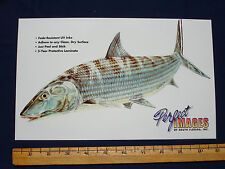 BONEFISH FISH DECAL STICKER DON RAY - REVERSE IMAGE ALSO AVAILABLE