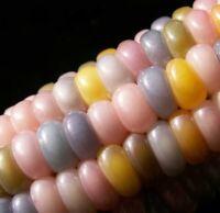 ORGANIC BIO PINK CANDY Sweetcorn Heirloom Rainbow Maize Corn 20 seeds Mais Maiz