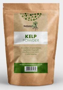 Premium Kelp Powder - Seaweed Ascophyllum Nodosum - Highest Quality - ALL SIZES