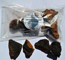 WILD Siberian Chaga Mushroom 6.7 Oz (190 Grams) 2020 Harvest; Inonotus obliquus