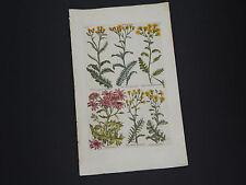 Sir John Hill, Botanical, The Vegetable System 1761-1775 Groundsel #19