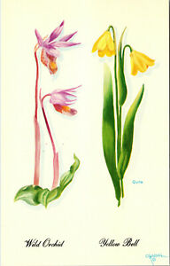 Wild Orchid Yellow Bell Flower Teton Harrison Crandall Art Vintage Postcard