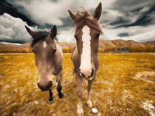 ANIMAL PHOTO DUO HORSES CLOSE UP FACES LARGE WALL ART PRINT POSTER LF1888