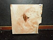 Spalted Maple LACE Burl Wood 8861 Arts Crafts Sculpture Instrument 12x12x2