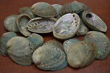 """25 PCS NATURAL GREEN ABALONE SEA SHELL (ONE SIDE POLISHED) 2 1/2"""" - 3"""" #7116G"""