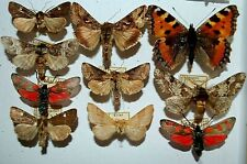 Moth Mix,Europa 45,rare