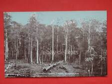 AUSTRALIA Clearing Forest Timberlands  Queensland old postcard