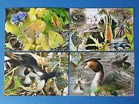 Set of 4 NEW British Wildlife Collage Postcards Photography by Ian Rabjohns BJ3