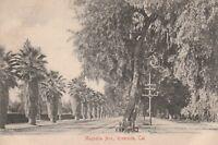 (W)  Riverside, CA - Magnolia Avenue and Surrounding Palms