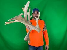 New ListingHuge 124� Drop Tine Whitetail Deer Antler Cut Taxidermy Cabin Decor Craft Horn