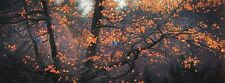 "Stephen Lyman ""Steller Autumn"" Limited Edition Lithograph. Signed. Mint."