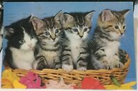 Postcard Animal Cat Kittens in a basket - posted 1982