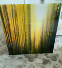 """Peter Lik """"Cathedral Forest"""" 1 Meter 39"""" x 39"""" Limited edition with COA"""