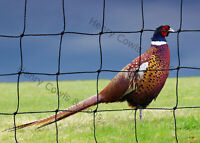 Chicken  Game Poultry Netting Net  Protection 38mm Garden Pheasant Mesh 5M X 10M