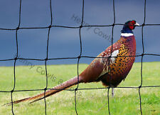 Heavy Duty Game Netting Net Strong Protection 38mm Garden Pheasant Mesh 5M X 10M