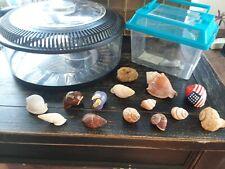 hermit crab pet supplies terrarium, shells, sponge bundle