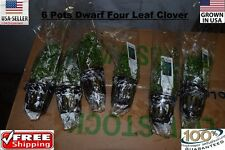 6 pots Four leaf clover Pot plants Easy Aquarium aquascaping planted tank easy