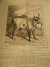 Caricature 1878 - Expo d'Animaux Boeuf Turc On s'est tant battu de leurs côtés