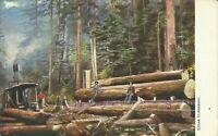California Steam Lumbering Raphael Tuck Giant Tree 2205 1905 Postcard