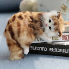 Realistic Persian Cat Pet Plush Kids And Children Sleeping cat Animal Toy Doll