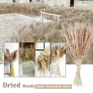 50CM Natural Dried Flowers Brown Bouquet Boho Decoration Home Bedroom Livingroom