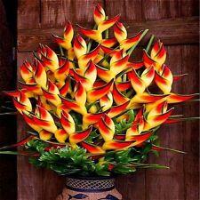 100+ Indoor Potted Plant Flower Orange Strelitzia Reginae Seeds Bird Of Paradise