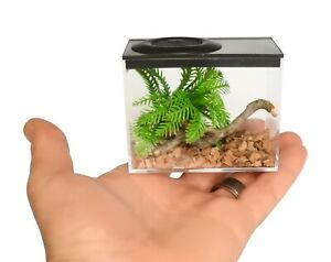 Insect Rearing Boxes,Fine Mesh Vent,Ideal For Nymphs,Praying Mantis,Spiders Etc