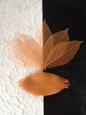 25 Skeleton Leaves Dyed Copper see through leaf Wedding Autumn Invitation medium