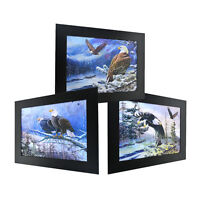 3 Dimension 3D Lenticular Picture Snow White Headed Bald Eagle Mountain Forest