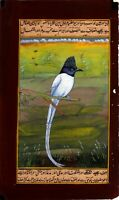 Handmade Mughal Miniature Painting Of Indian Flycatcher Bird With Paper Mount