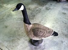 Avery FFD Elite Canada Goose decoys with Moving Heads
