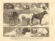 Dog Show Winners, Birmingham England, Bulldog, Setter, Mastiff, Pomeranian, 1874