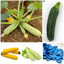 10 Pcs Seeds Summer Squash Bonsai Organic Zucchini Vegetable Plants Garden NEW Y