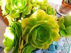 plante artichaut ,a planter lot de 3 rosaces,reprises faciles jardin ,verriér
