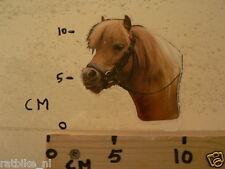 STICKER,DECAL PAARDEN STICKER HORSE B