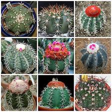 20 semi in miscuglio di Melocactus mix ,piante grasse,seed cactus mix