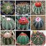 100 semi in miscuglio di Melocactus mix ,piante grasse,seed cactus mix
