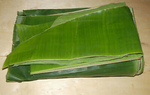 FRESH BANANA LEAVES ORGANIC COOKING TEXAS 2 POUNDS