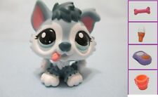 Littlest Pet Shop Dog Baby Puppy Husky Blue 2036 and Free Accessory Exclusive