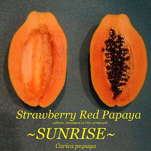SUNRISE Strawberry RED Papaya Hybrid SUNUP SOLO BEST Papaya UH Cultivar 30+ SEED