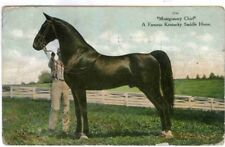 MONTGOMERY CHIEF ,FAMOUS SADDLE HORSE, ORIGINAL, VINTAGE,POSTED 1909