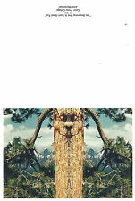Lot of 10 Greeting Card (Two Becoming One is Such Great Fun, Nature Pine Tree)