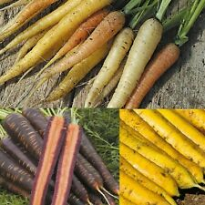 Vegetable Seeds  - Carrot - Mixed - 250 Seeds